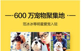 东方智启科技APP千赢国际娱乐老虎机-宠物看护app千赢国际娱乐老虎机的哪种模式更易成功