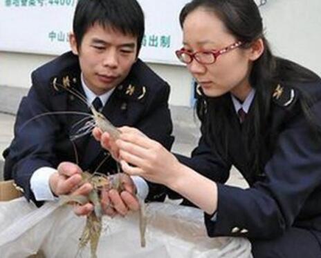 渔业养殖APP千赢国际娱乐老虎机解决方案