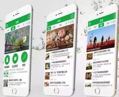 web app开发