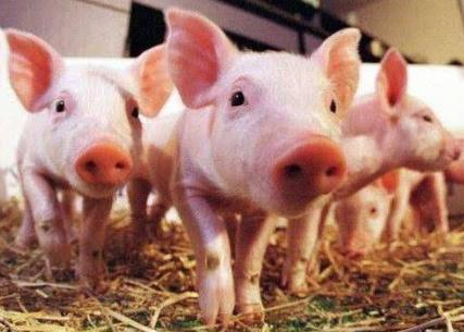 养猪场APP开发