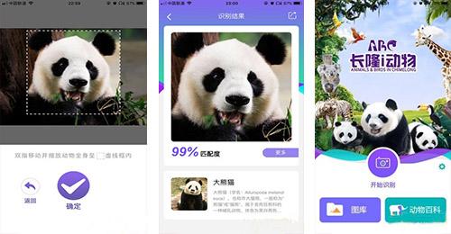 大熊猫认脸APP千赢国际娱乐老虎机