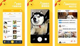 东方智启科技APP开发-铃铛宠物app点评 铃铛宠物app如何
